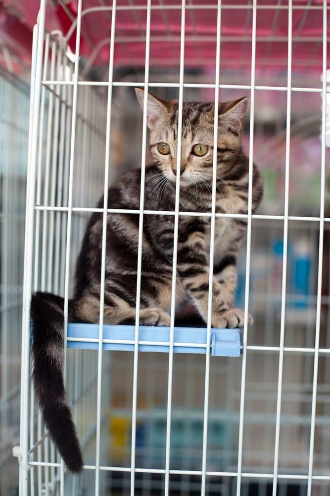 Maryland prohibe la venta de cachorros y gatitos en tiendas de mascotas