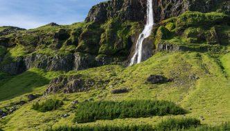 Islandia está reforestando sus bosques 1.000 años después de que los vikingos los arrasaran