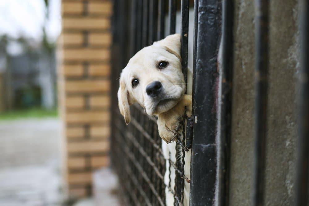 Un punto de encuentro virtual entre protectoras, refugios y personas que quieren adoptar un animal