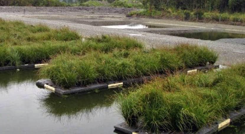 Depurar aguas residuales con humedales artificiales una alternativa para pequeñas poblaciones
