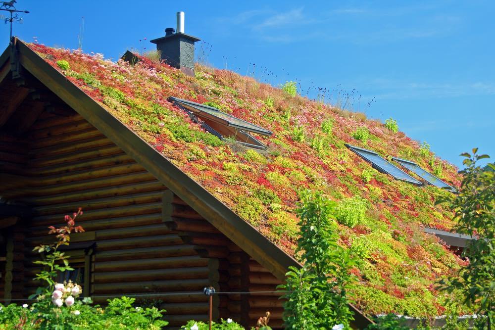 Beneficios, funcionamiento y tipos de techos verdes