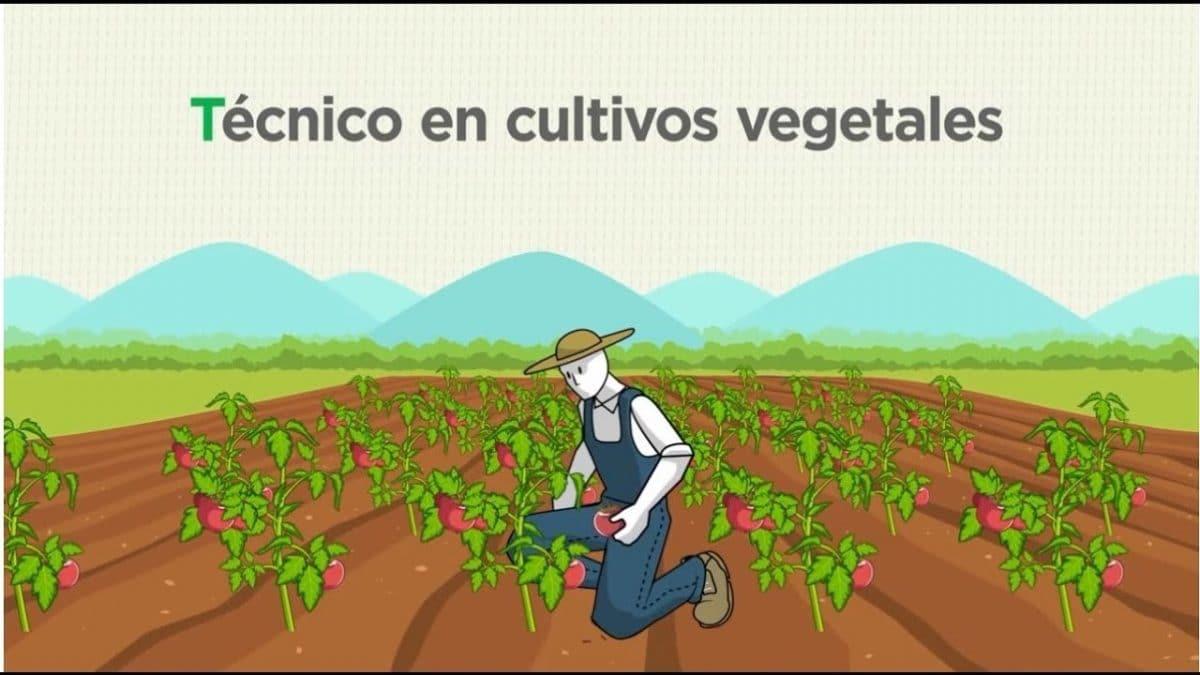 Curso online gratuito de técnico en cultivos vegetales