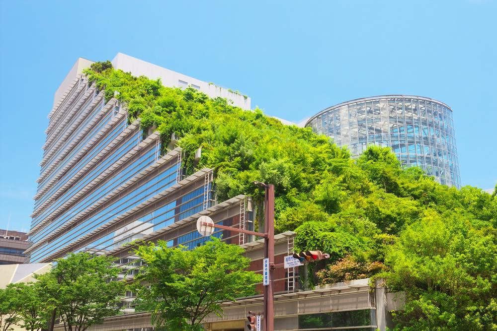 Beneficios, funcionamiento y tipos de tejados verdes
