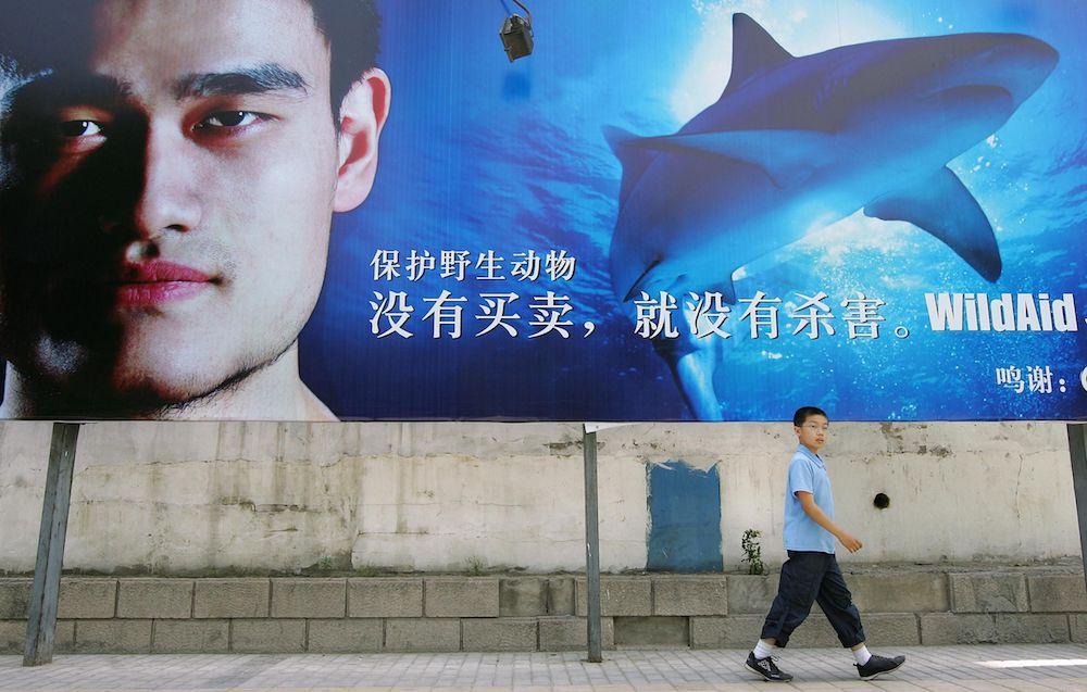Gracias a Yao Ming, la caza de tiburones por sus aletas ha descendido un 50%