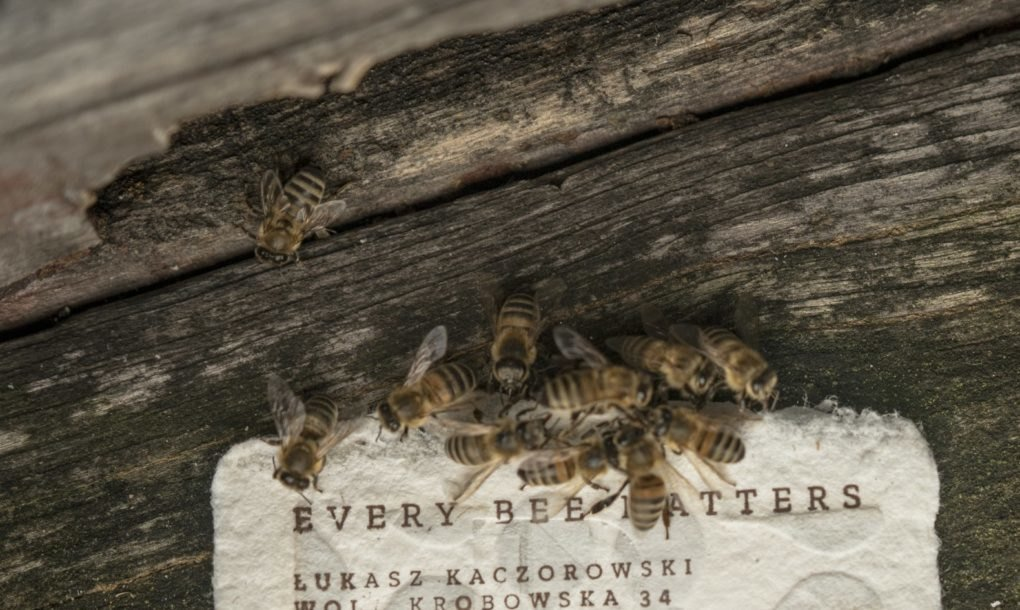Bee-saving-paper