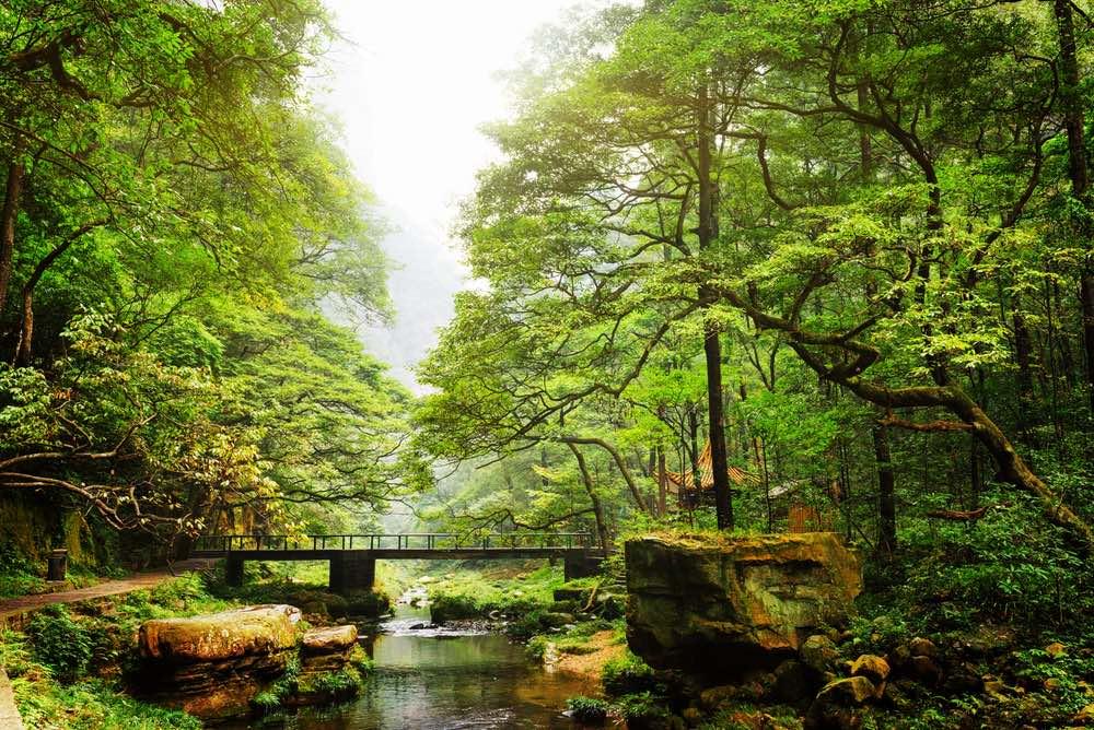 China-bosque