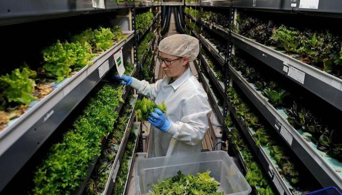 La (nueva) granja vertical más grande del mundo estará en Dubai