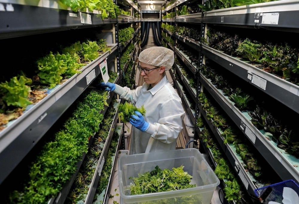 Freshbox-farms