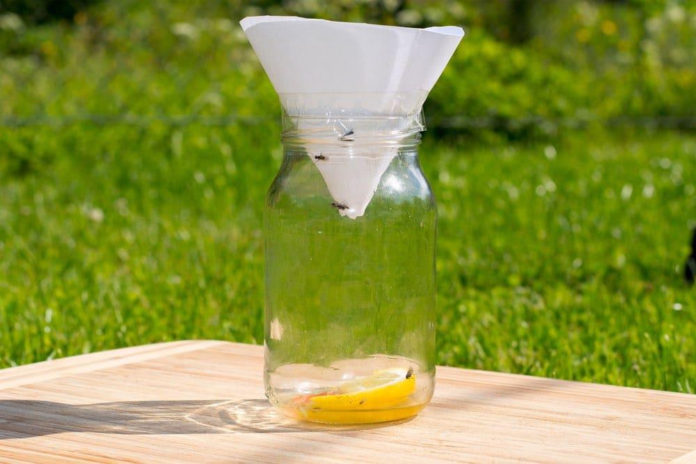 Trampa anti-moscas con vidrio