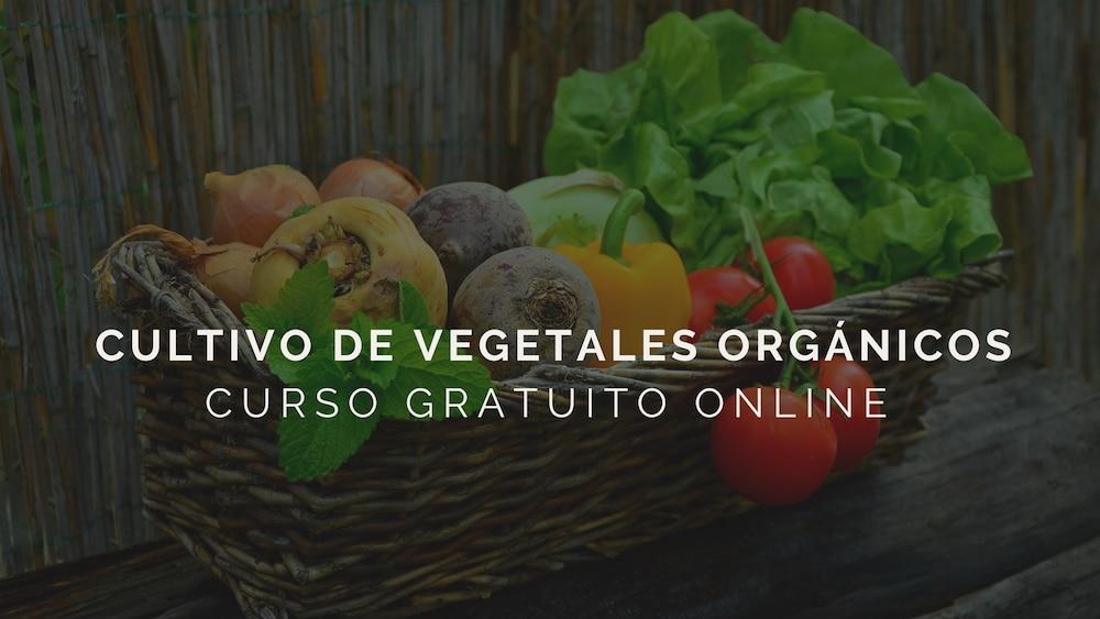 Cultivo-de-vegetales-organicos