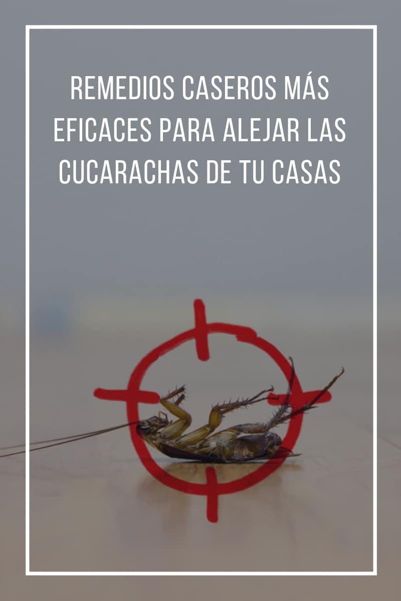 Remedios Caseros Más Eficaces Para Alejar Las Cucarachas De Tu Casa