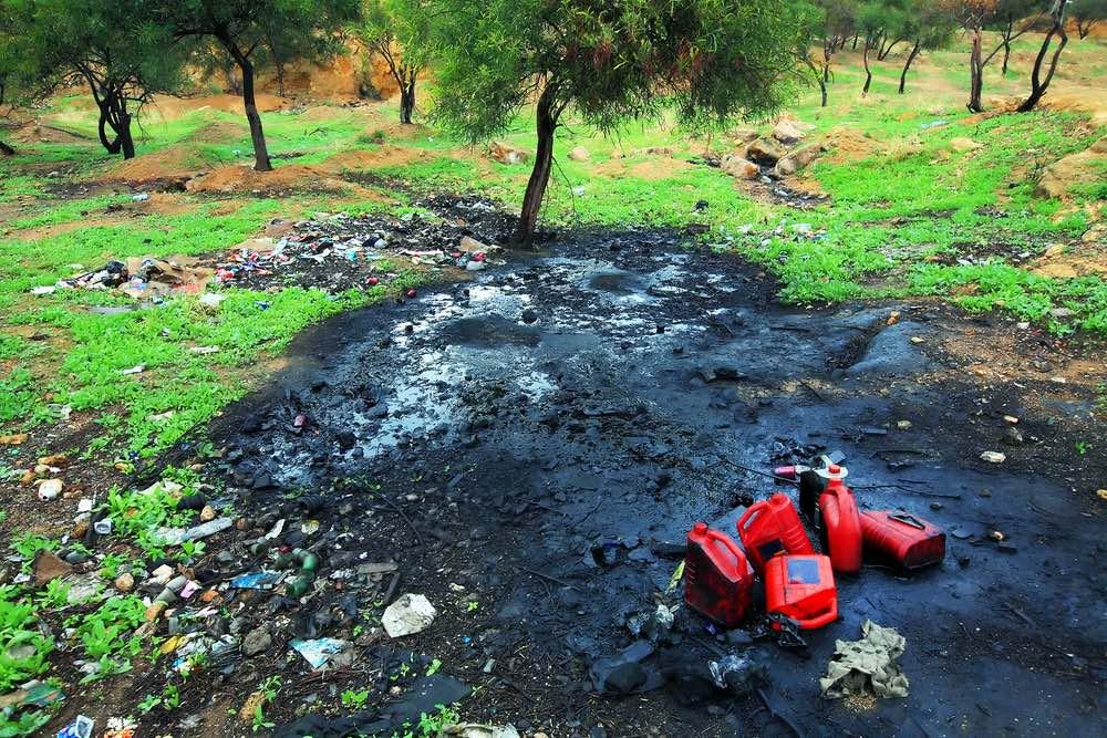 Fitorremediación para suelos contaminados