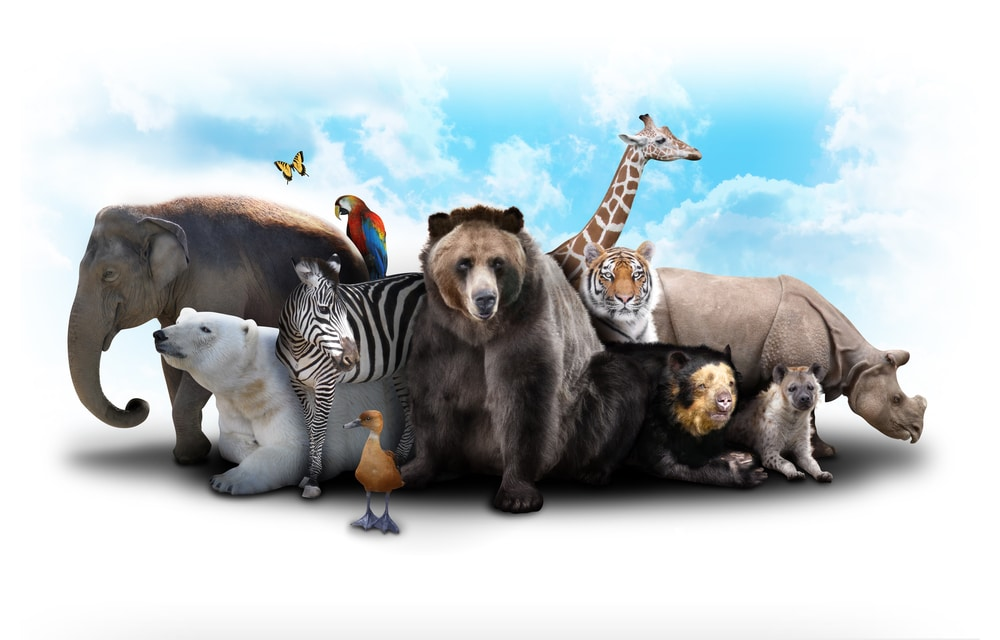 Animales-peligro-extincion