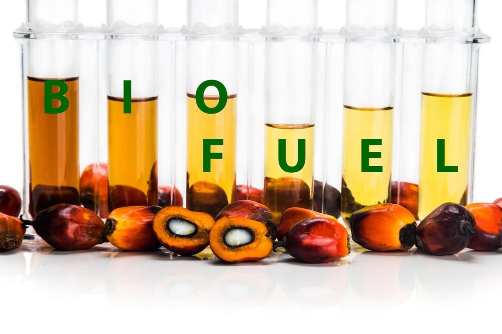 Biofuel-aceite-de-palma