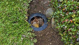 Biopori Hole, un método natural para evitar inundaciones y enriquecer los suelos