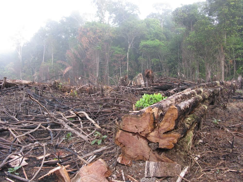 Deforestacion-amazonia-brasil