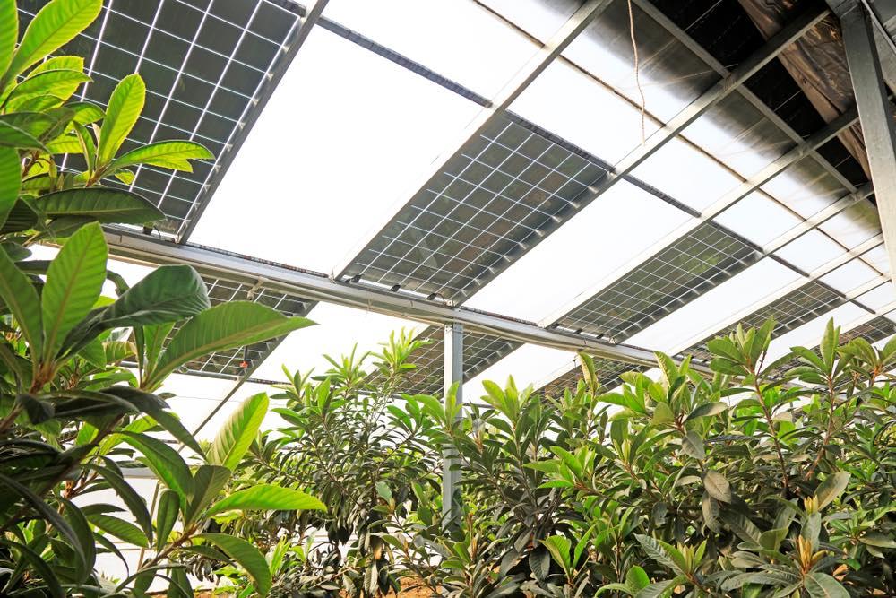 Invernaderos fotovoltaicos orgánicos