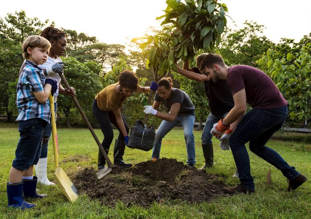 Plantacion-comunitaria-de-arboles