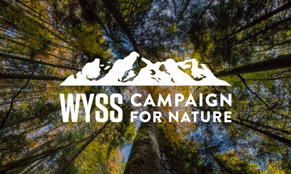 Wyss Campaign for Nature