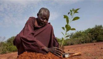 Yacouba Sawadogo, el agricultor que detuvo el desierto