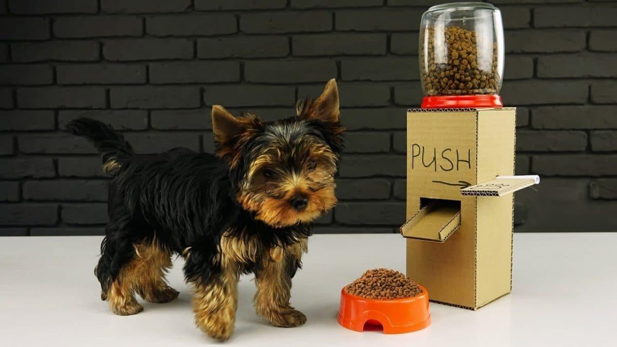 Cómo hacer un dispensador casero automático de comida para perros