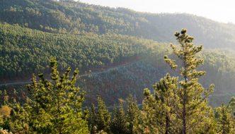 Impacto económico del eucalipto en Galicia – Norte de España
