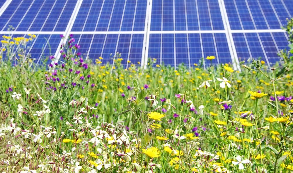 Flores-paneles-solares