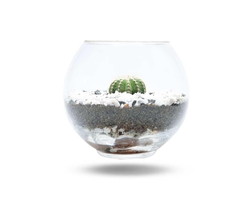 Cómo plantar cactus en frascos de vidrio