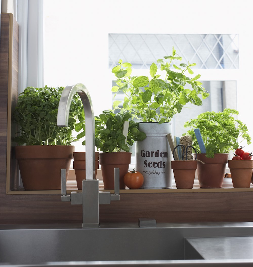 Cultivos-en-cocina