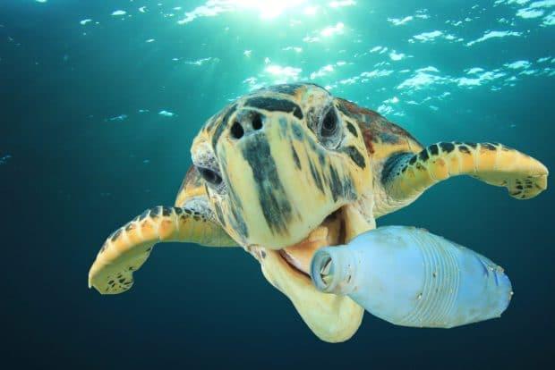 Botella plastico tortuga mar