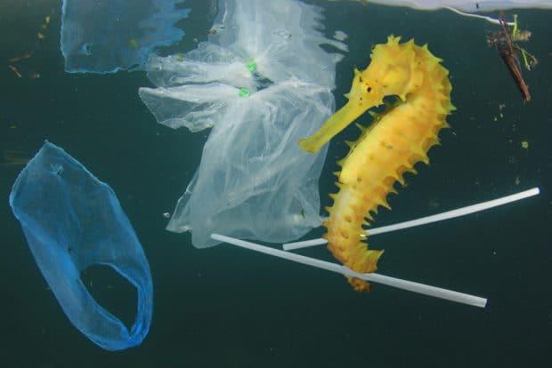 Caballito de mar basura plastico
