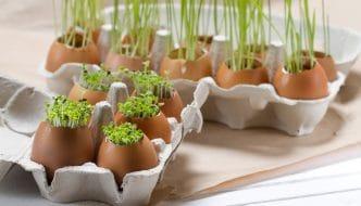 Qué hacer con las cáscaras de huevos