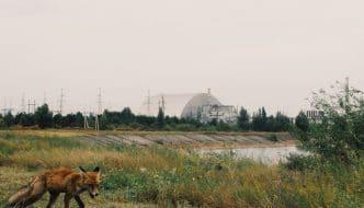 Sin humanos, la vida salvaje de Chernobyl prospera