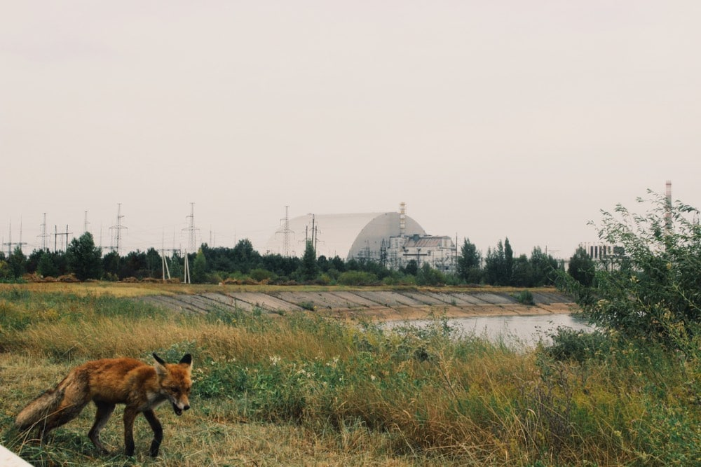 Chernobyl-zorro