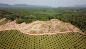 Noruega inicia los pagos a Indonesia para reducir la deforestación