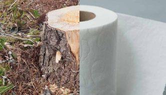 El problema medioambiental del papel higiénico y qué utilizar en su lugar