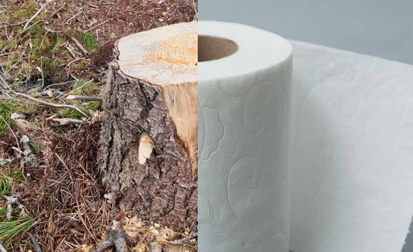 Papel-higienico-deforestacion
