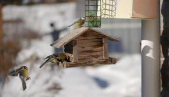 Poner un comedero para pájaros en tu jardín es una gran idea