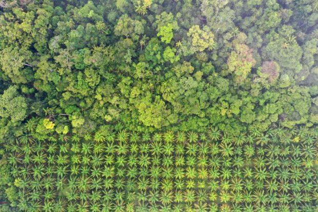 Deforestación por cultivos de palma