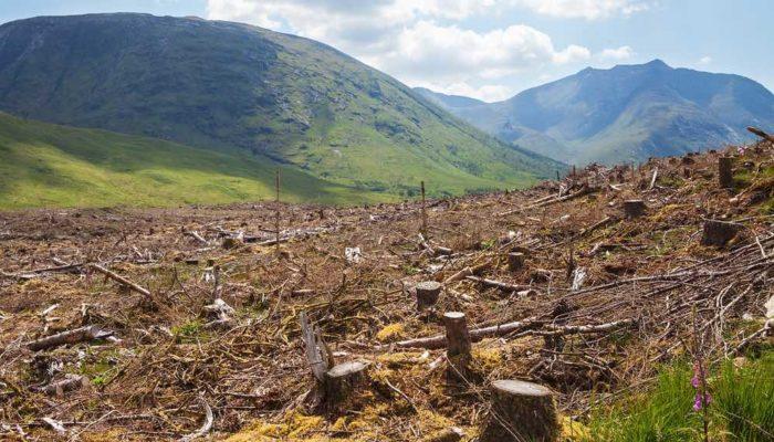 Las grandes multinacionales han arrasado 50 millones de hectáreas de bosques
