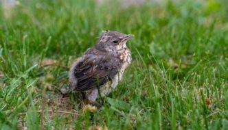 Qué hacer si nos encontramos un pájaro bebé que se ha caído del nido