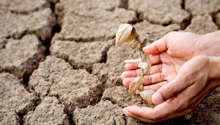 La extinción de plantas se está produciendo a un ritmo 500 veces superior que antes de la Revolución Industrial