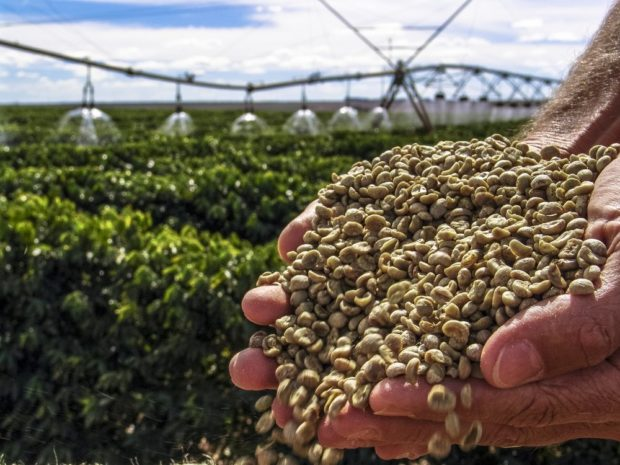 Riego plantación de cafe