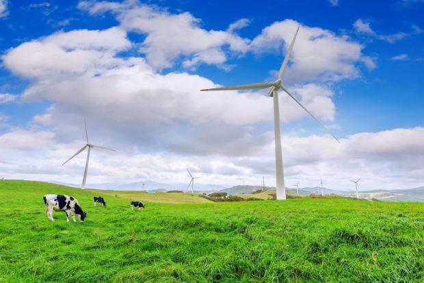 Aerogeneradoes y vacas