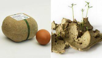 Biopack, las hueveras que se pueden plantar después de usarlas