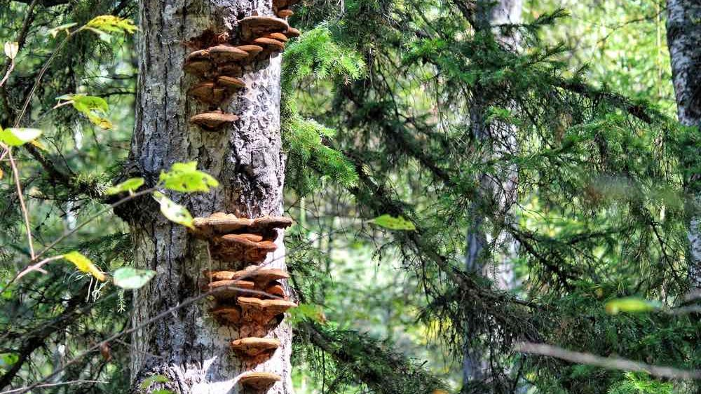 Cropped-tree-fungus