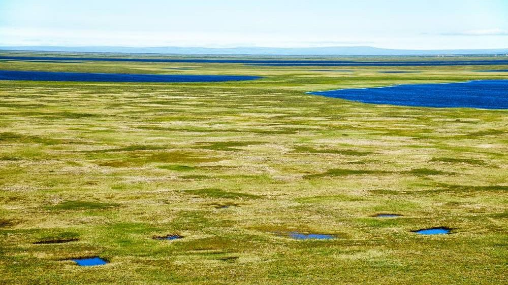 Cropped-tundra