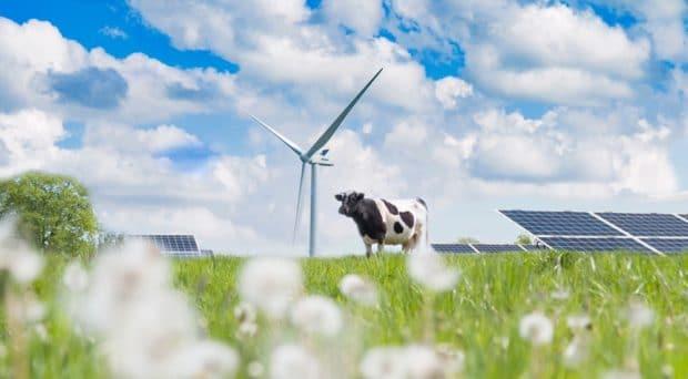 vaca aerogenerador solar