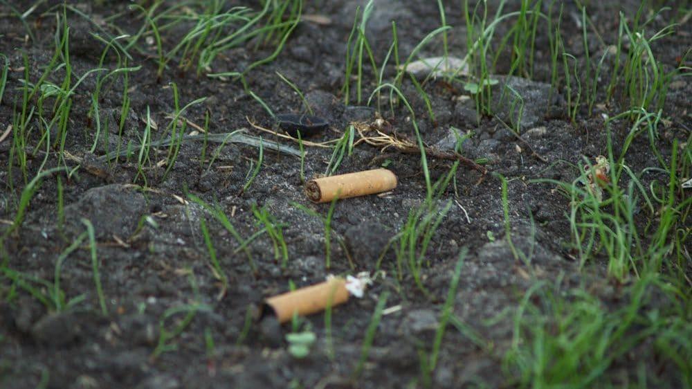 Cropped-colillas-de-cigarillos-plantas