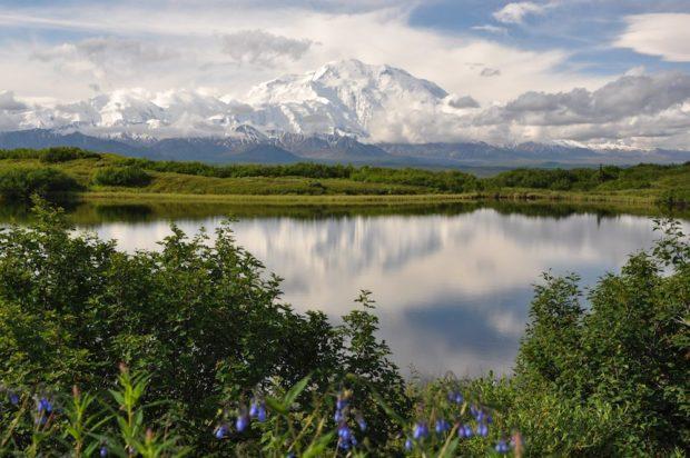 Refugio Nacional Vida Silvestre del Ártico